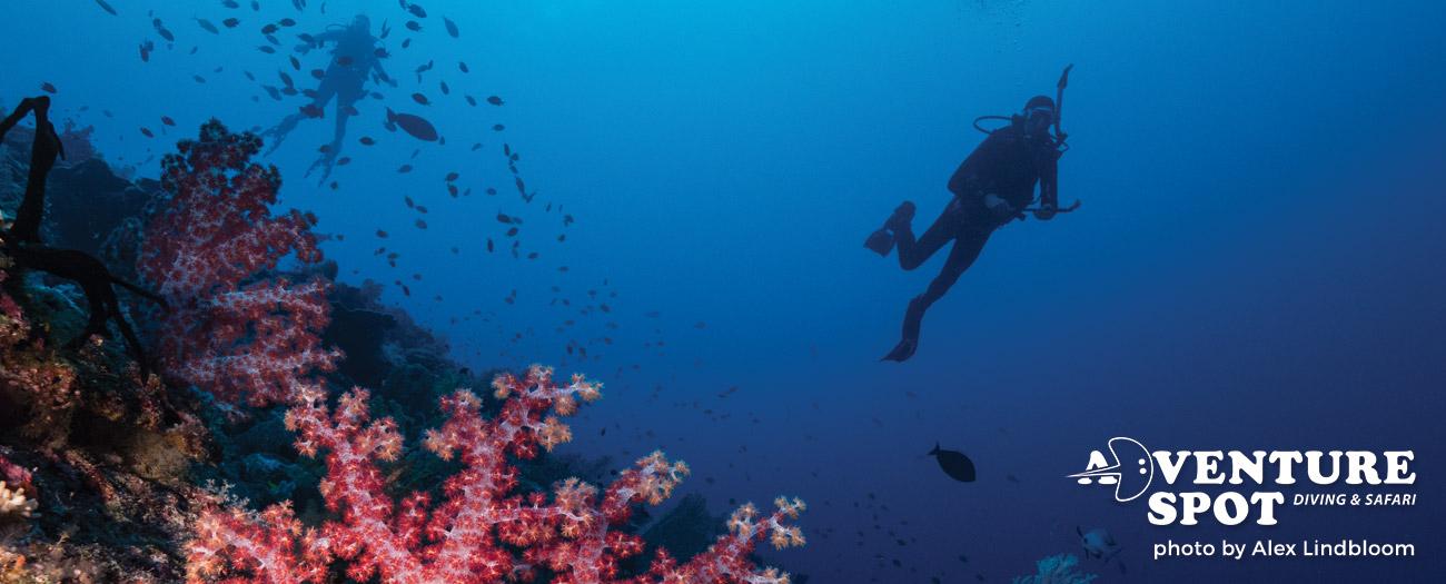 PADI Adventure Diver with Adventure Spot