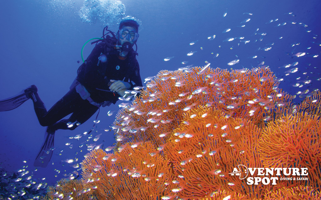 Scuba Diving in Dahab